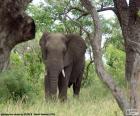 Jíst trávu slon