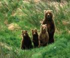 Medvěd Rodinné