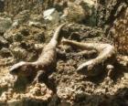 Velcí ještěři na některých skalách