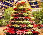 Vánoční stromeček vánoční hvězdy