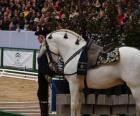Elegantní kůň s ornamentem