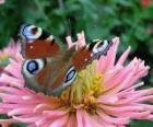 Krásný motýl s křídly dokořán