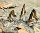 Motýli na kmeni