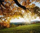 Posloupnost kopce s několika stromy