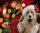 Štěně s kloboukem Santa Claus v košíku