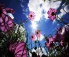Krajina s květinami
