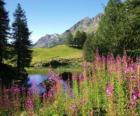 Jezero v popředí květiny a vysokohorských kancelář