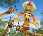 Melman žirafa, skrytá pod zvědavé oči ostatních žiraf