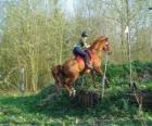 Technická Předmět jezdecké soutěže, testy porozumění mezi koněm a jezdcem pomocí různých testů.