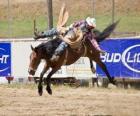 Kovboj na koni chovat koně v rodeu