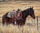 Kůň kovboje