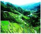 Rýžové terasy Filipínské Kordillery