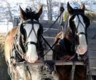 Dva koně tahání vozu