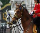 Koně s ornamenty