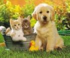 Doggy se dvě koťata