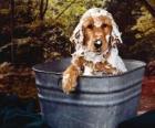 Štěně nebo malý pes s vanou