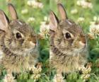plachý králík