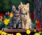 dvě kočky s náhrdelníkem
