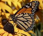 motýl na žlutý květ