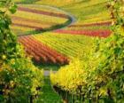 podzimní krajiny v Vineyard