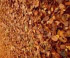 Spadané listí na zemi, typický obraz podzimu