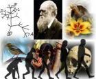 Darwin den, byl Charles Darwin narodil 12. února 1809. Darwin strom, první program z jeho evoluční teorii