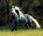 Krásný koně s dlouhou hřívou a dlouhým ocasem