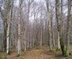 Les bez listí, v zimě