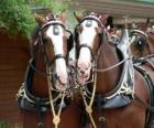 Dva tažní koně