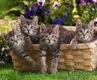 Čtyři koťata v košíku