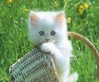 Roztomilý bílá kočička