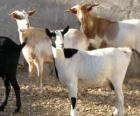 Domácí kozy