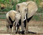 Máma ovládání malý slon s pomocí jejího chobot