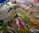 Terasy Yunnan, Čína