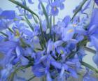 Kytice z lilie
