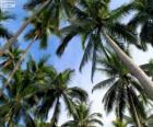 Tropické palmy