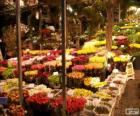 Květinový trh, Amsterdam, Nizozemsko