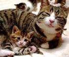 Máma kočka s její dítě kočka