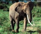 Slon s kly