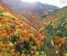 Les v barvách podzimu