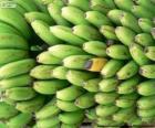 Zelené a žluté banánů