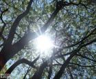 Pobočky a slunce