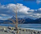 Mrtvý strom poblíž jezero