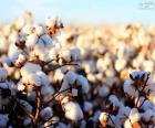 Květiny z bavlna