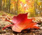 Podzimní listí lese