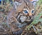 Zvědavá kočka