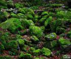 Kameny, pokryté mechem