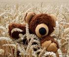 Medvídek, obiloviny