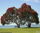 Dva stromy