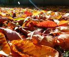 Suché listí na podzim